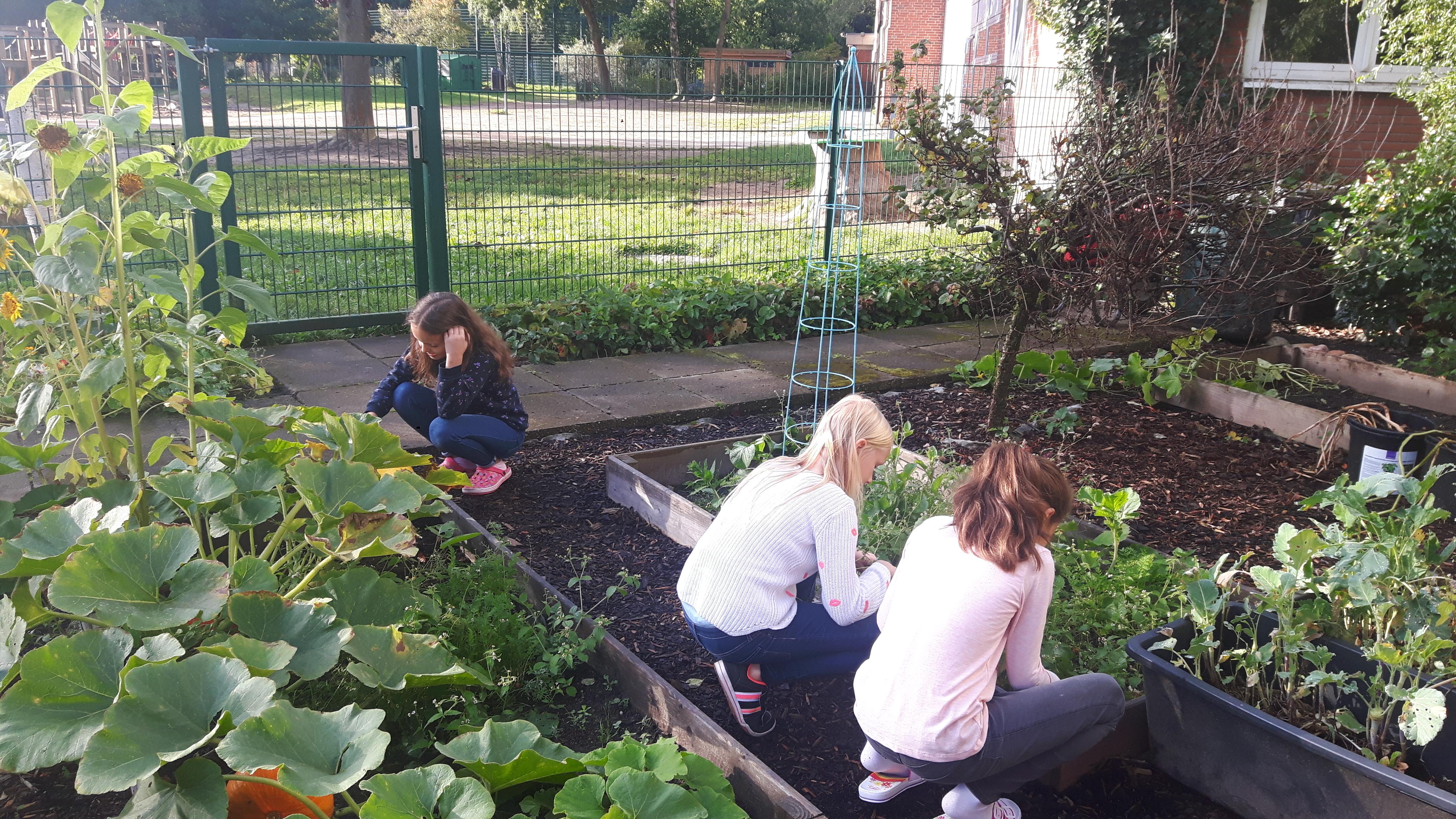 Kinder arbeiten in unserem Schulgarten